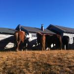 Kvistli Islandshester – Horseback riding