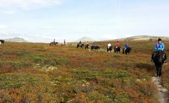 Venabu Fjellhotell – Horseback riding